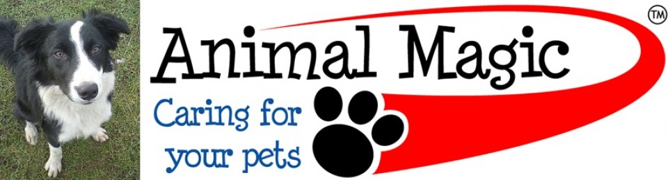 Animal Magic Dog Training