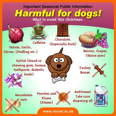 Harmful Foods To Dogs Christmas